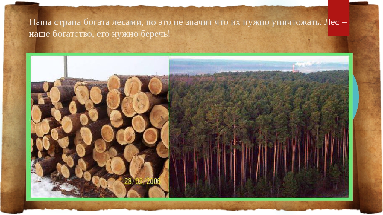 Наша страна богата лесами, но это не значит что их нужно уничтожать. Лес – на...