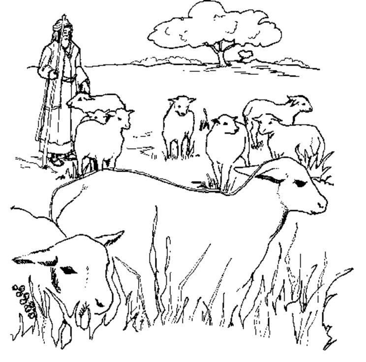 картинки с овцами карандашом них