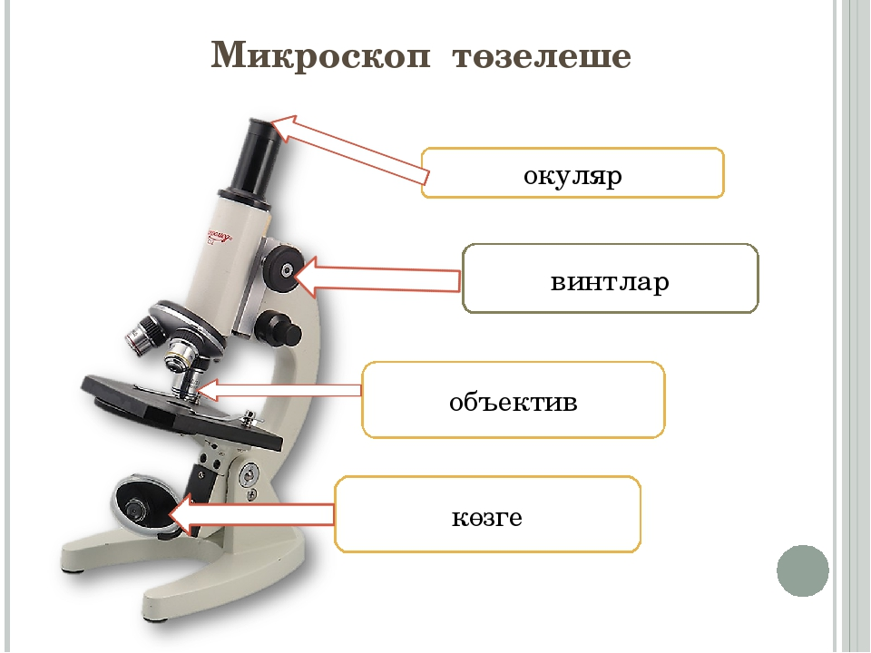 Микроскоп төзелеше окуляр объектив көзге винтлар