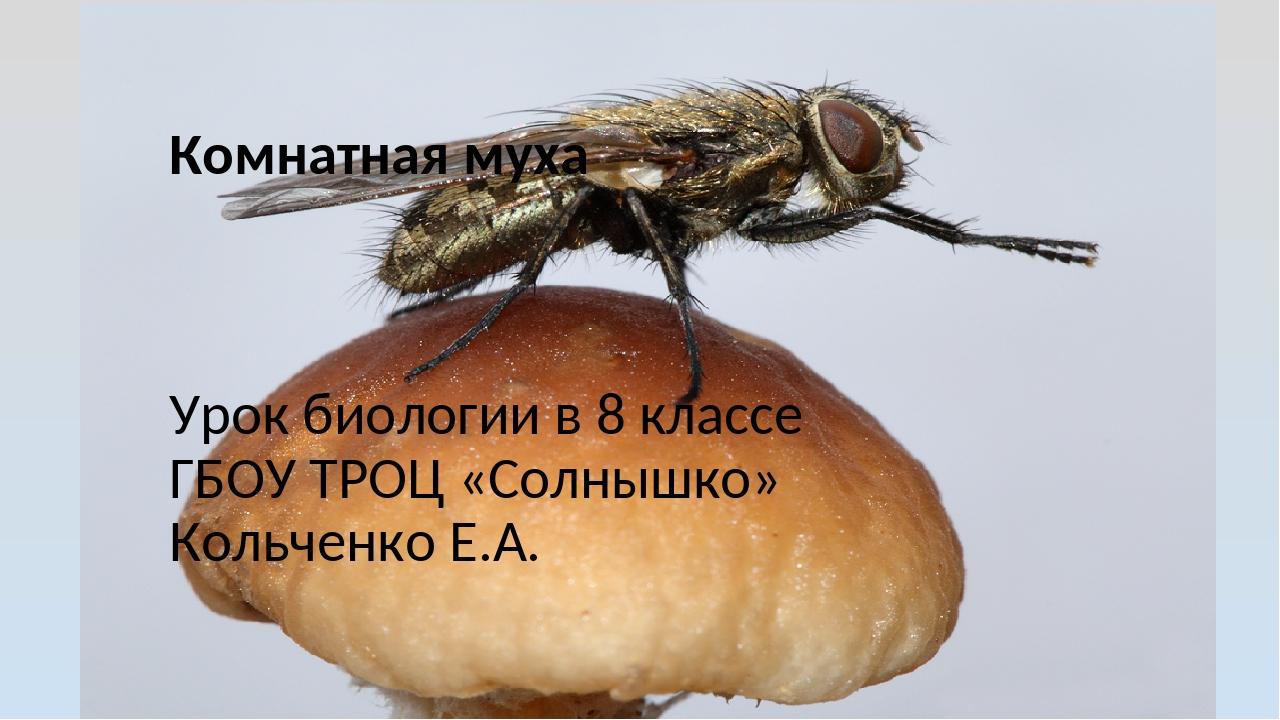 Комнатная муха Урок биологии в 8 классе ГБОУ ТРОЦ «Солнышко» Кольченко Е.А.