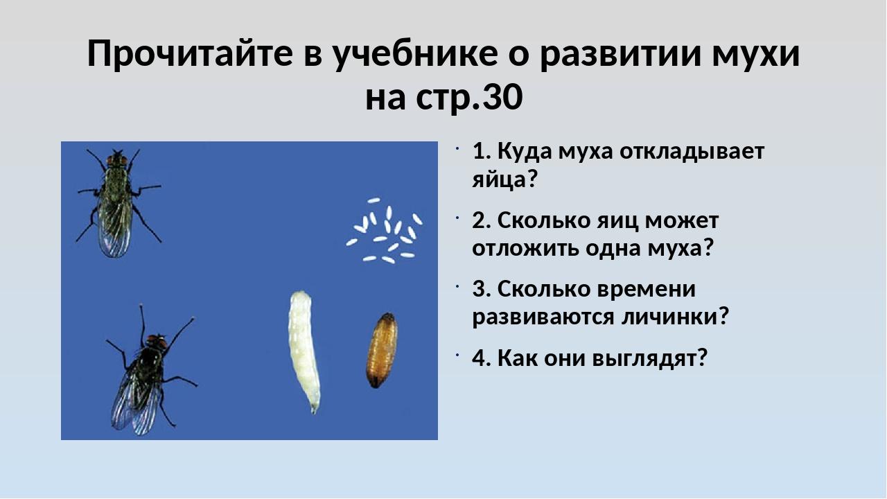 Прочитайте в учебнике о развитии мухи на стр.30 1. Куда муха откладывает яйца...