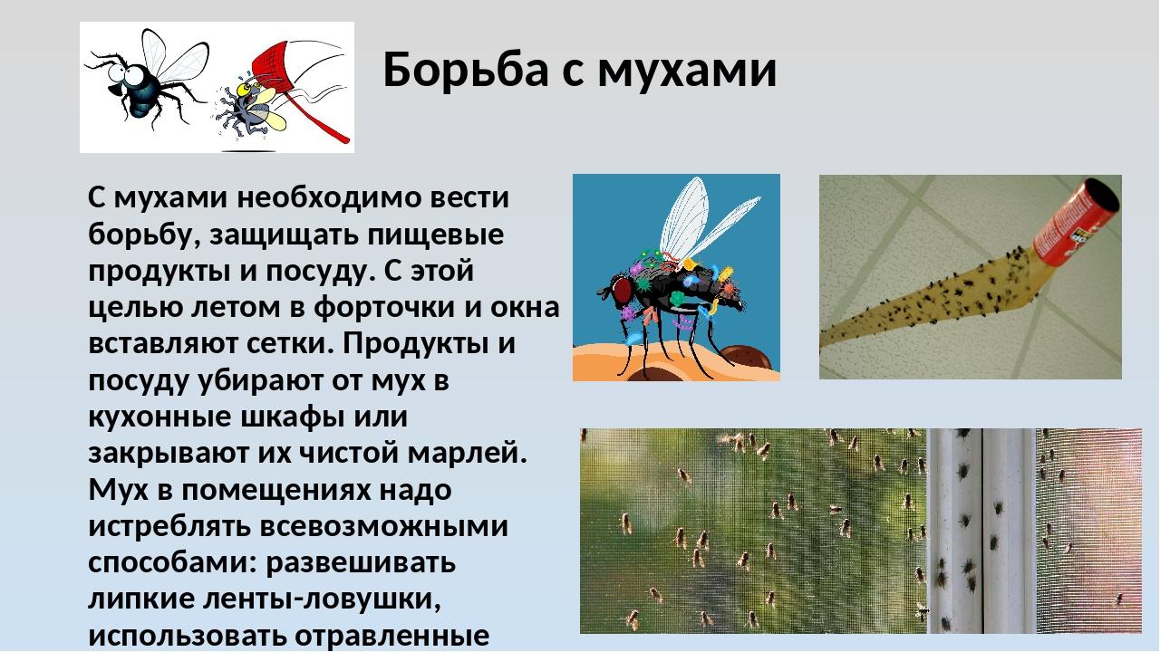 Борьба с мухами С мухами необходимо вести борьбу, защищать пищевые продукты и...