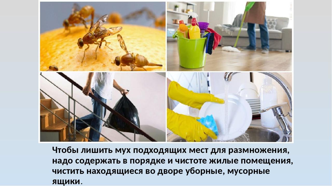 Чтобы лишить мух подходящих мест для размножения, надо содержать в порядке и...