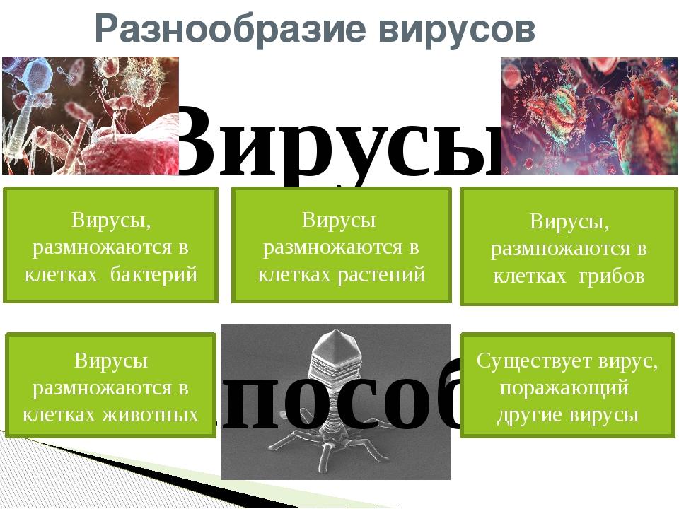 Разнообразие вирусов Вирусы не способны размножаться вне клетки! . Вирусы, ра...