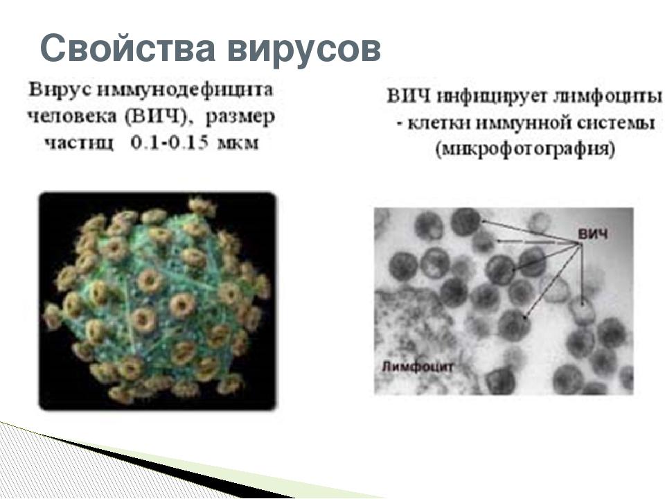 Свойства вирусов