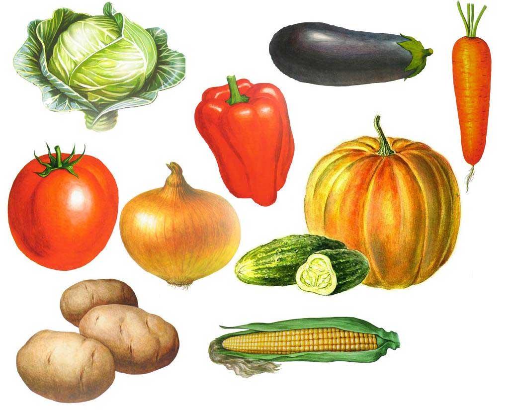 Овощи фрукты картинки детям