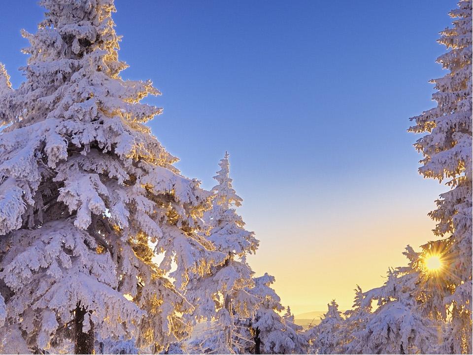 получения зимний лес фото на телефон сказка