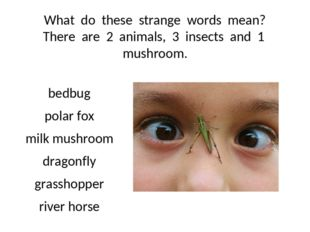 What do these strange words mean? There are 2 animals, 3 insects and 1 mushro