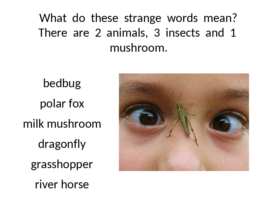 What do these strange words mean? There are 2 animals, 3 insects and 1 mushro...