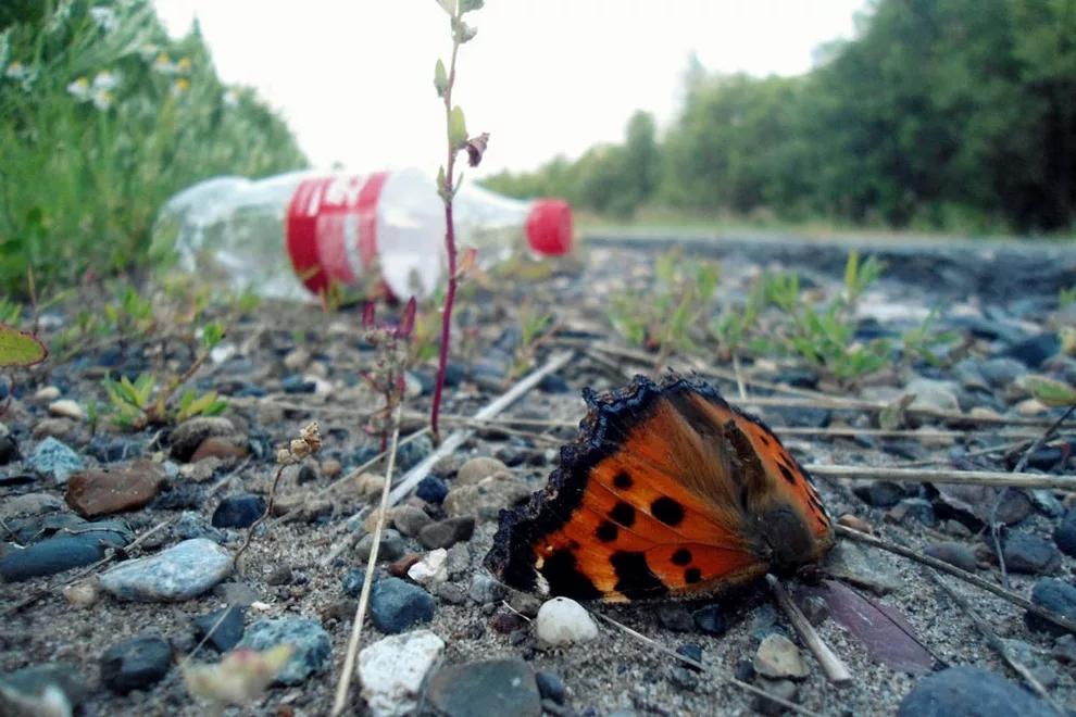 Удивительное рядом картинки экология