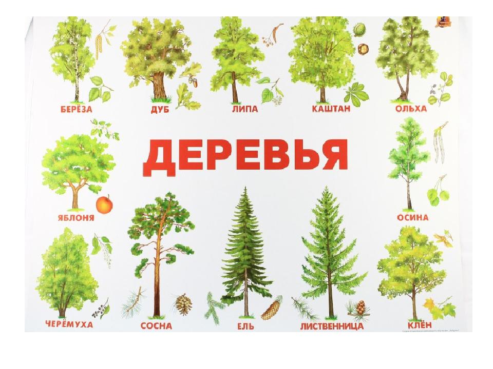 Названия деревьев в украине с картинками