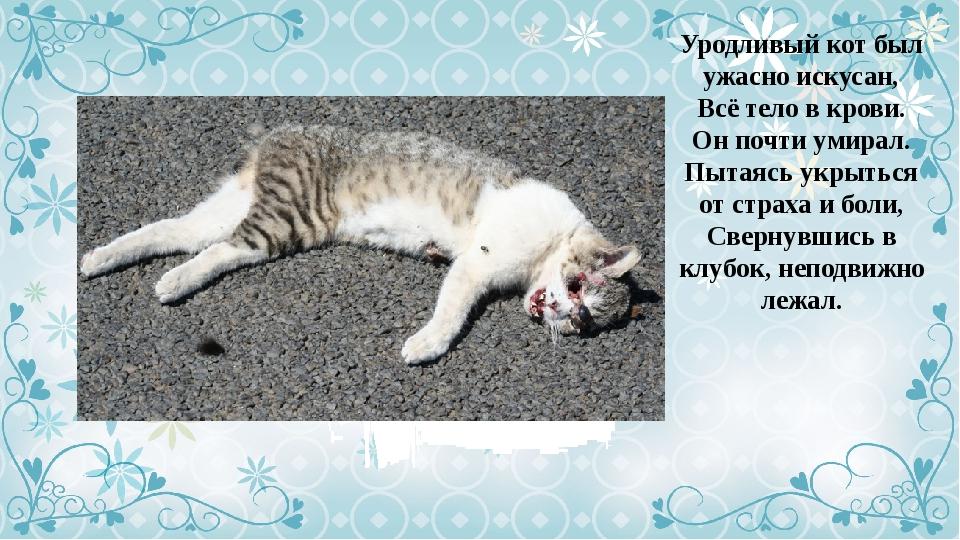 уродливый кот стих картинка маккензи удается мастерски