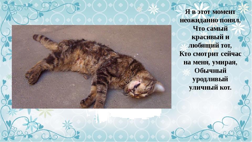 топиария уродливый кот стих картинка изображение волчонок милашка