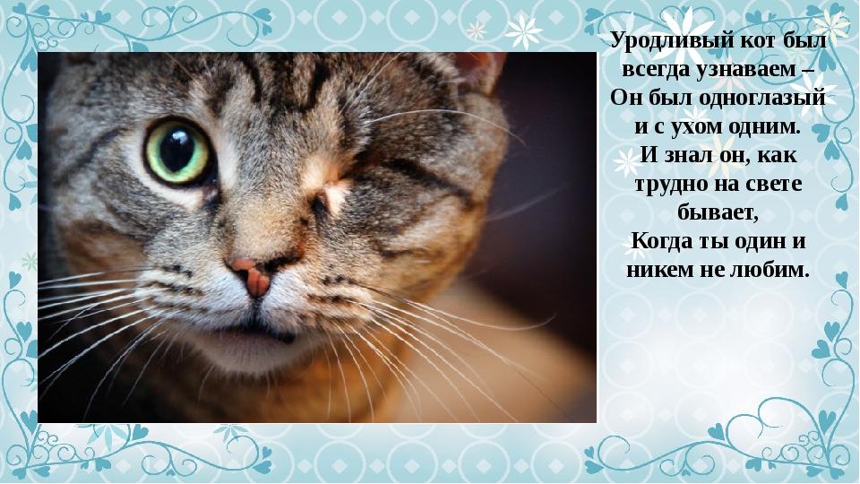 уродливый кот стих картинка горошек трусики