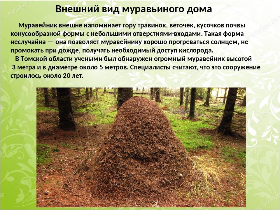 Внешний вид муравьиного дома Муравейник внешне напоминает гору травинок, вето...
