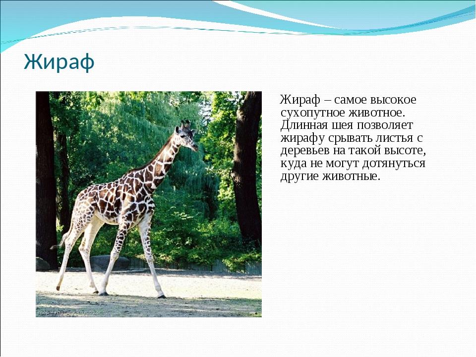 Жираф Жираф – самое высокое сухопутное животное. Длинная шея позволяет жирафу...