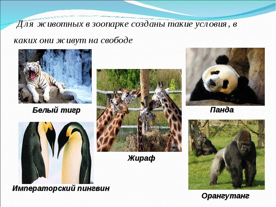 Для животных в зоопарке созданы такие условия, в каких они живут на свободе...