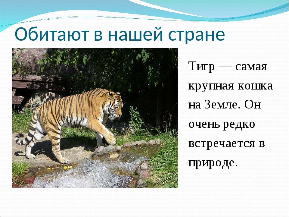 Обитают в нашей стране Тигр— самая крупная кошка наЗемле. Он очень редко вс...