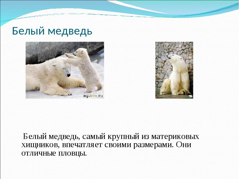 Белый медведь Белый медведь, самый крупный из материковых хищников, впечатляе...