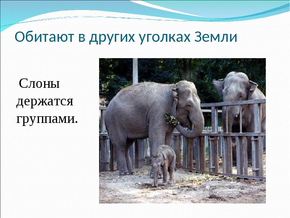 Обитают в других уголках Земли Слоны держатся группами.