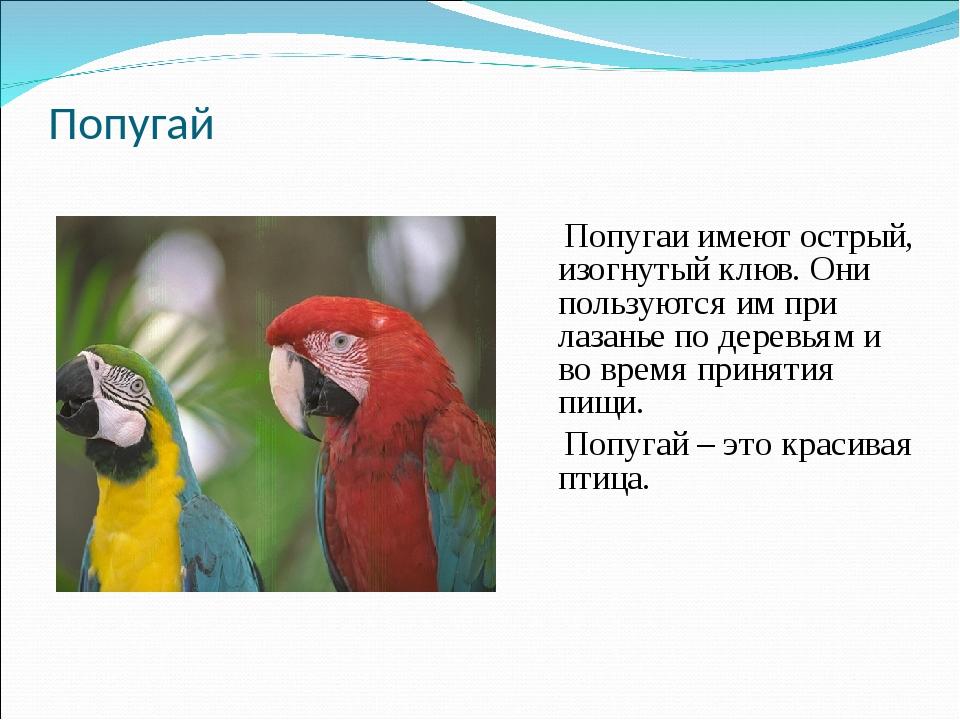 Попугай Попугаи имеют острый, изогнутый клюв. Они пользуются им при лазанье п...
