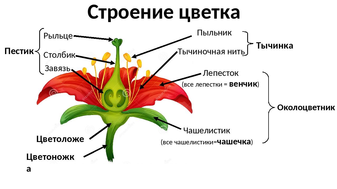 Биология цветы с картинками