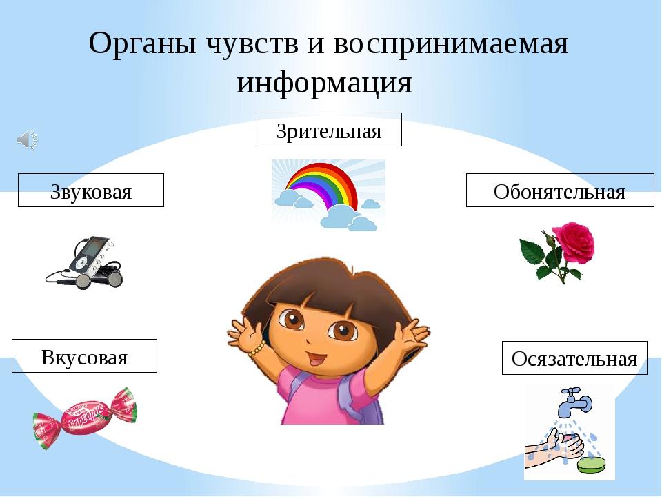 Органы чувств и воспринимаемая информация Вкусовая Звуковая Зрительная Обонят...