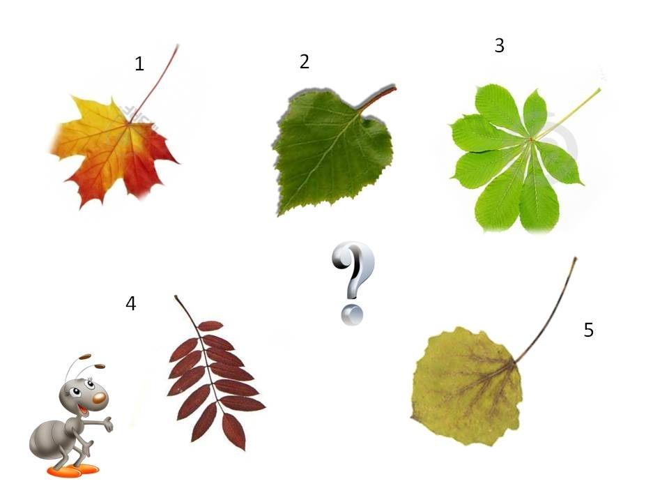 мне картинки листьев деревьев для презентации это