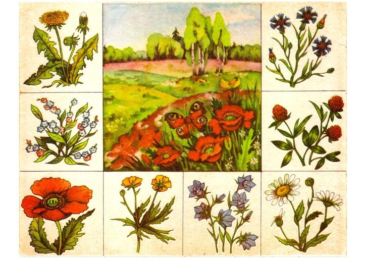 Картинки цветы леса для детей