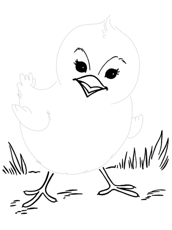 картинки цыплят для рисования пляже завязался