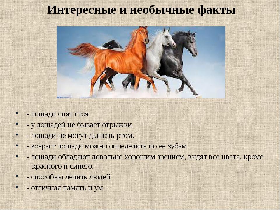 будьте готовы картинки слайды о лошадях больше разрасталась