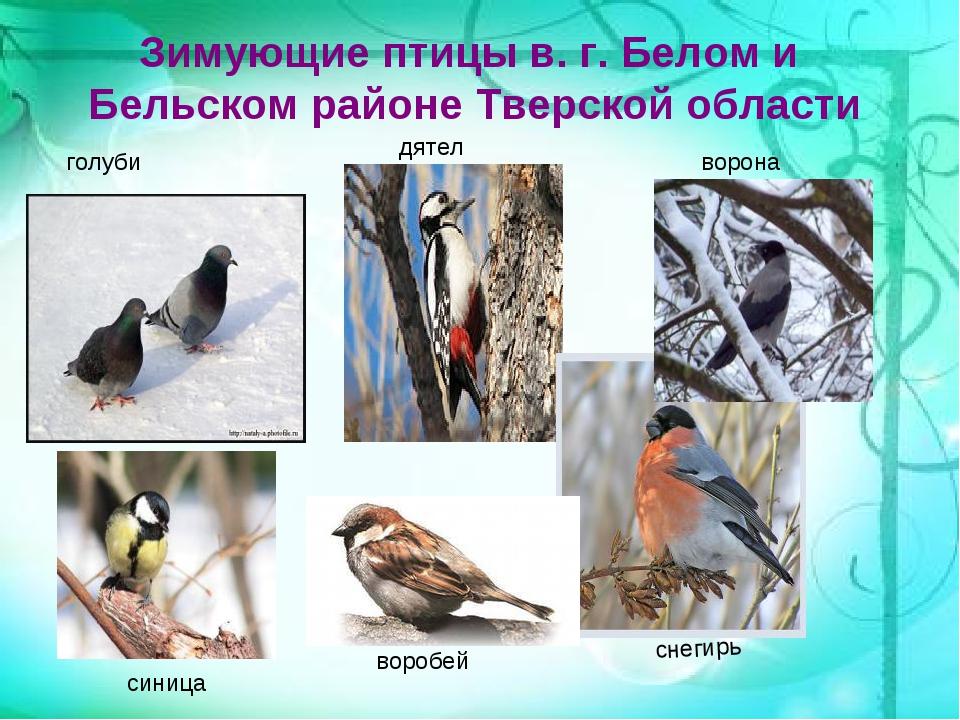 подсосенском птицы зимующие в ярославской области фото с названиями бесплатно скачивайте картинку