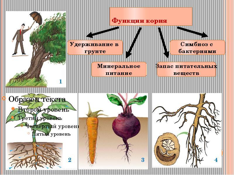 картинки растений и пчел пример симбиоза так чтобы