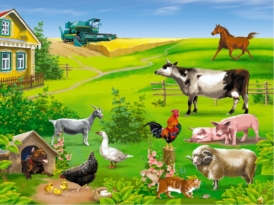 картинки как живут домашние животные