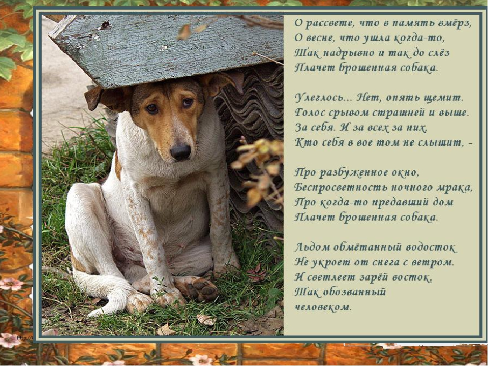 Картинки собаки стишками