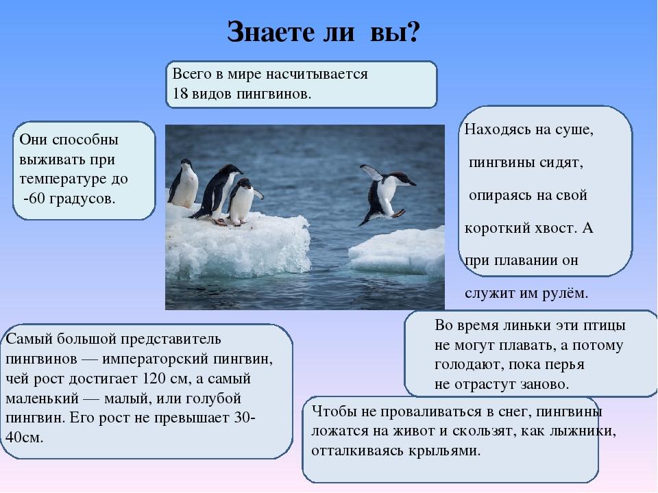 Знаете ли вы? Самый большой представитель пингвинов— императорский пингвин,...