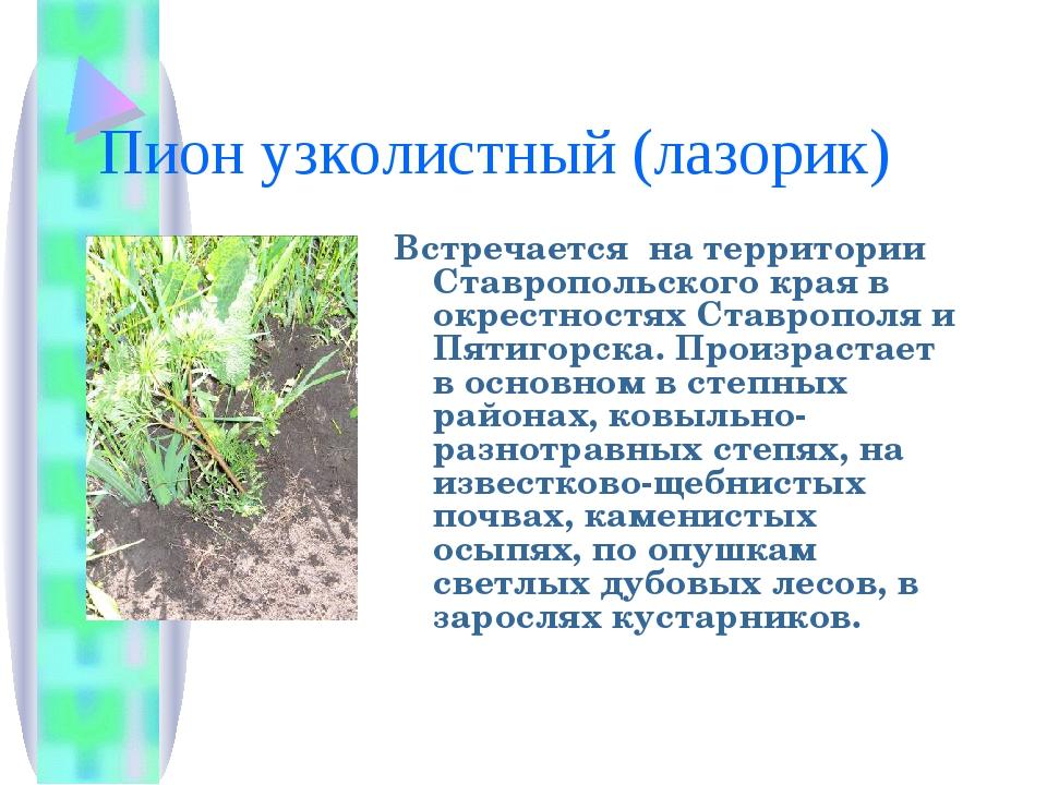 растения ставропольский край фото описание рисунок