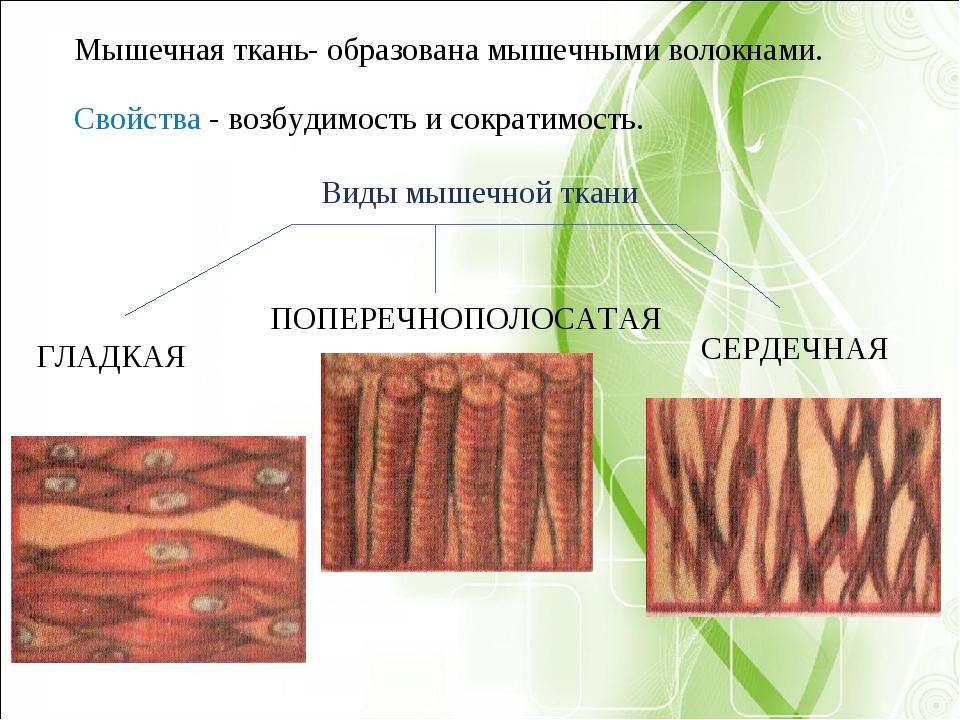 Виды мышечной ткани ГЛАДКАЯ ПОПЕРЕЧНОПОЛОСАТАЯ СЕРДЕЧНАЯ Мышечная ткань- обр...