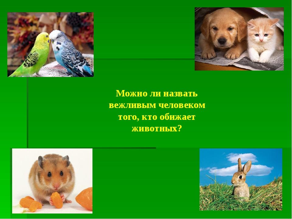 Можно ли назвать вежливым человеком того, кто обижает животных?