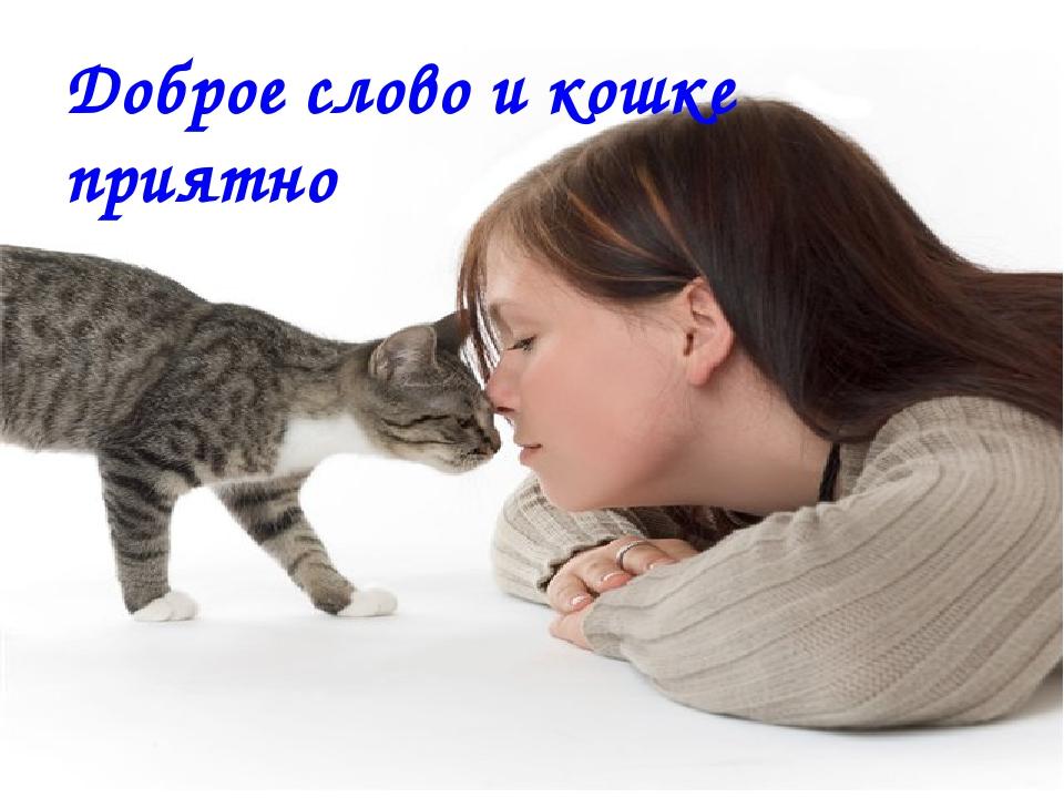Доброе слово и кошке приятно. Доброе слово и кошке приятно