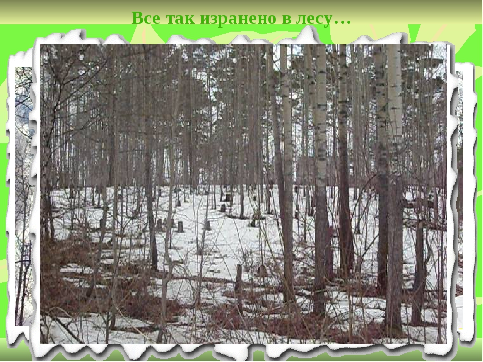 Все так изранено в лесу…