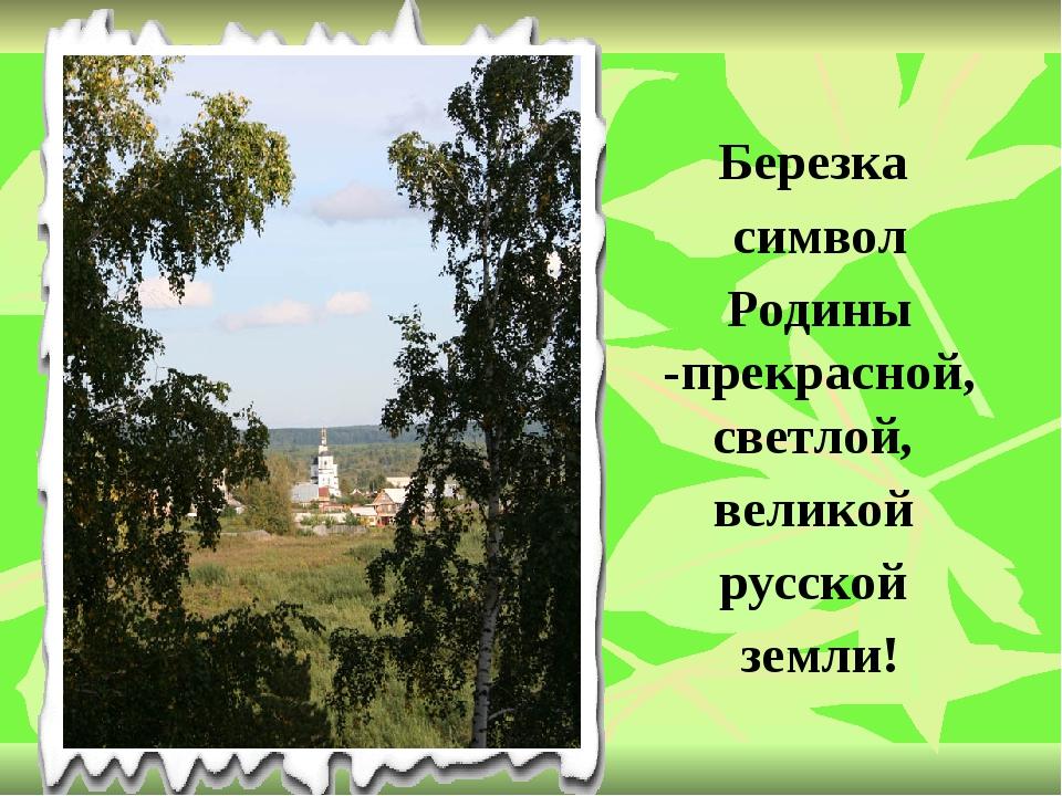 Березка символ Родины -прекрасной, светлой, великой русской земли!