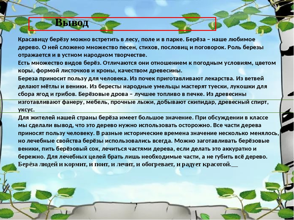 Вывод Красавицу берёзу можно встретить в лесу, поле и в парке. Берёза – наше...