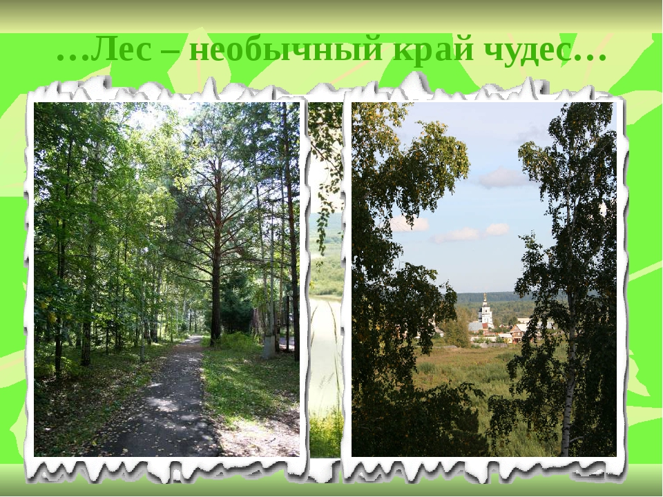 …Лес – необычный край чудес…