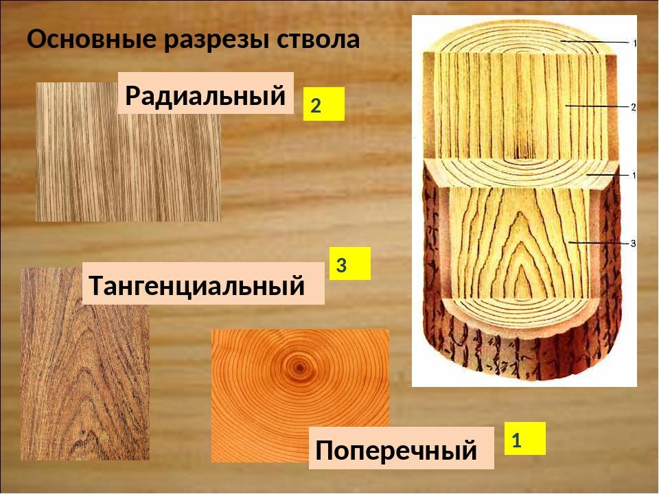 Радиальный Тангенциальный Поперечный Основные разрезы ствола 1 2 3