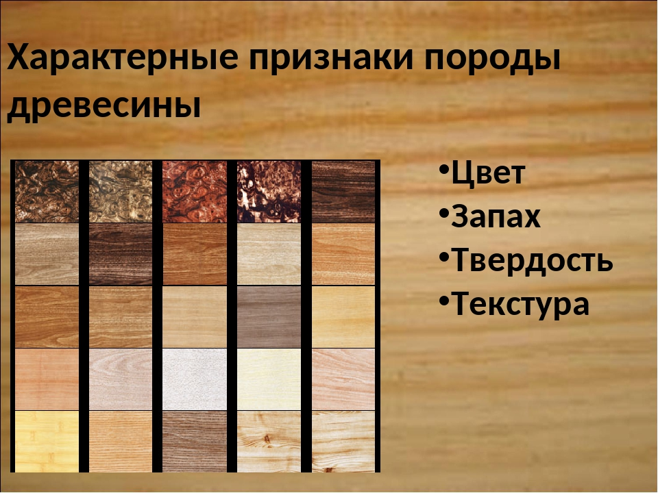 Характерные признаки породы древесины Цвет Запах Твердость Текстура