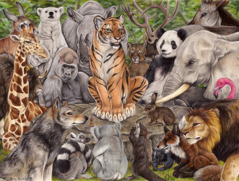 Картинки с разными животными на одной картинке