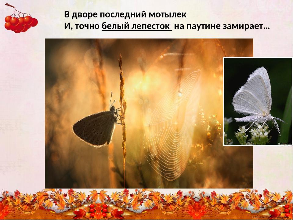 В дворе последний мотылек И, точно белый лепесток на паутине замирает…