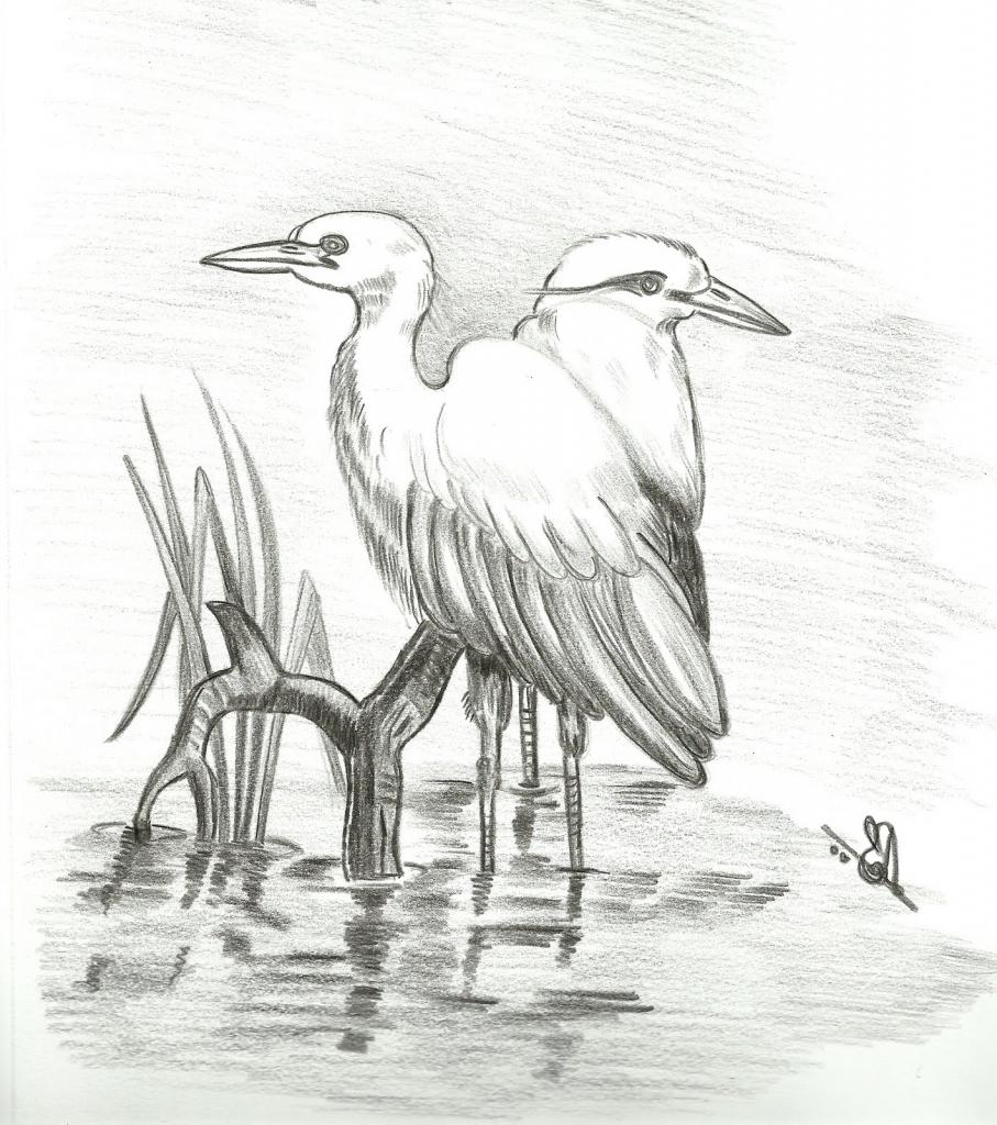 старых, картинки диких птиц простым карандашом станок предназначен