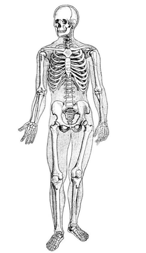 Открытки день, картинка скелет человека без подписей